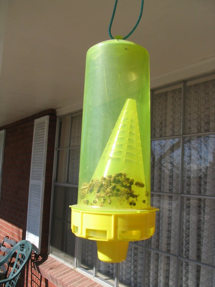 Bee Trap Up Close