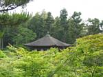 Japanese Roof in a Forest - May, 2004