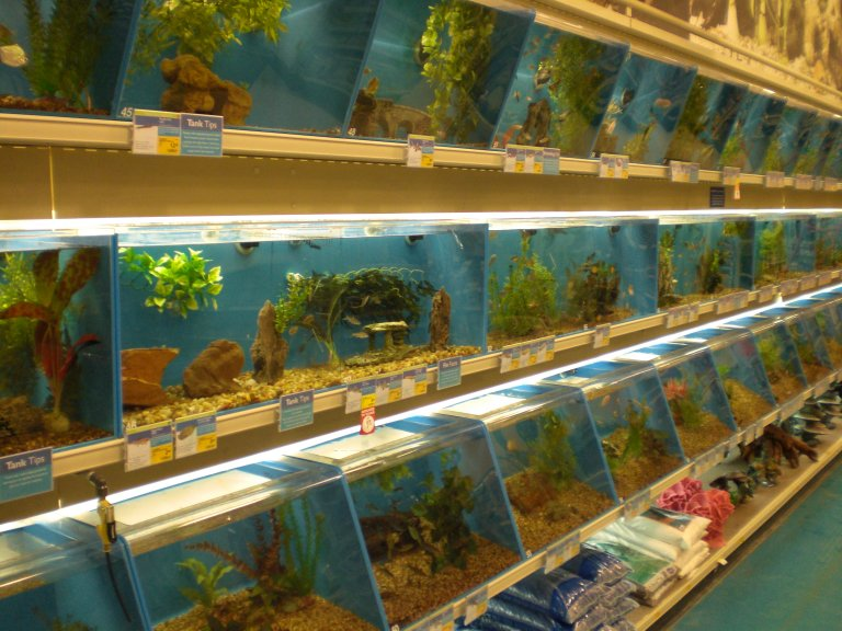nature picture selection fish stores