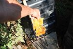 Sun Chip bag compost experiment follow-up - 08-10-2014