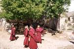 Young Tibetan Monks - June 20012001